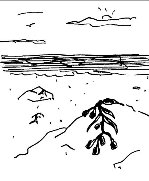 Adnams 'Seaweed' Dave Rough