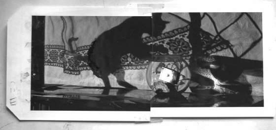 BH-Goldfish-Polaroid-1050115-sprks
