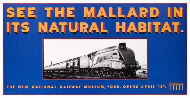 NRM_Mallard_48