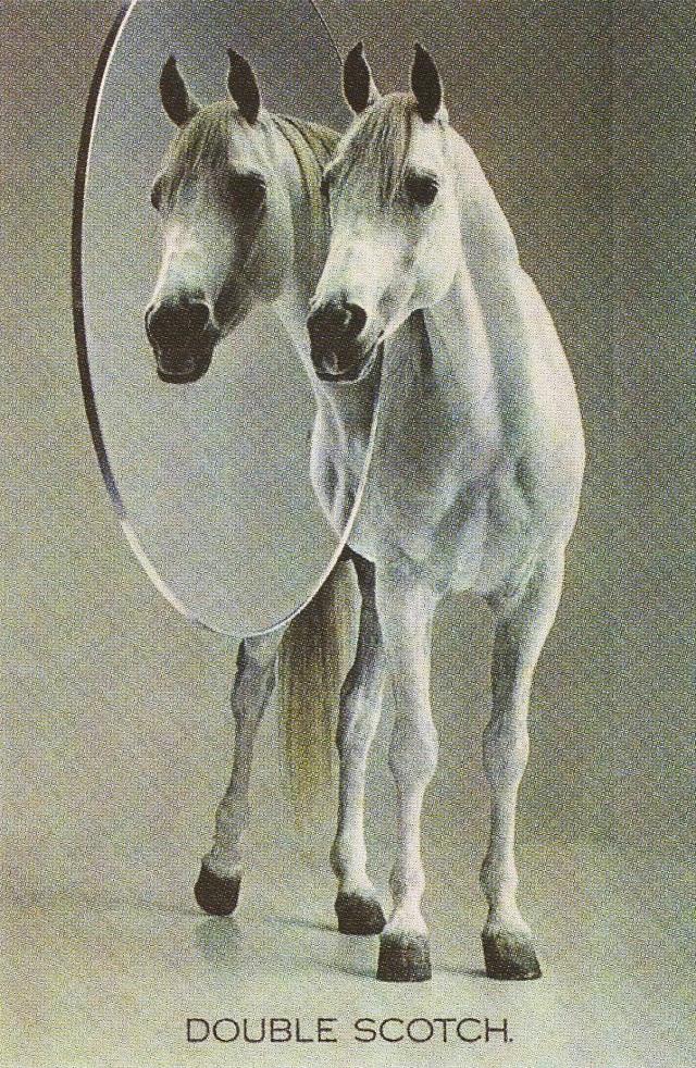 white-horse-double-scotch**