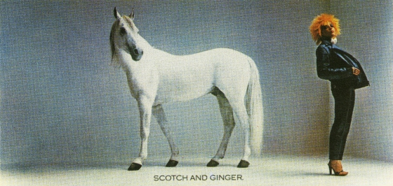 white-horse-ginger*