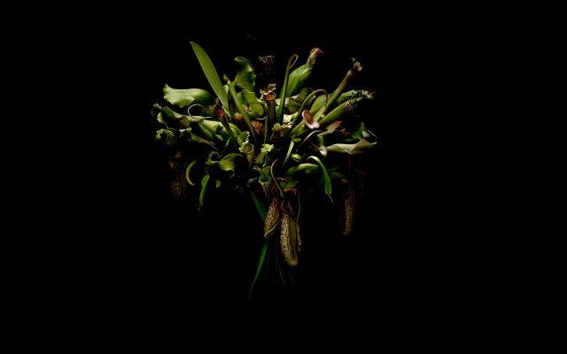 Giles Revell - Flowers:Black, Dave Dye