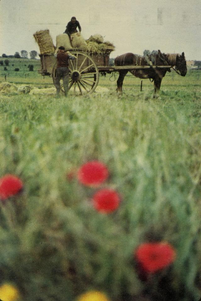 Robert Freson, 'Poppy'-01