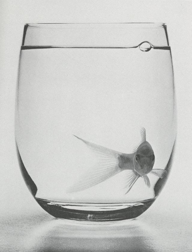 phil-marco-goldfish-glass-01