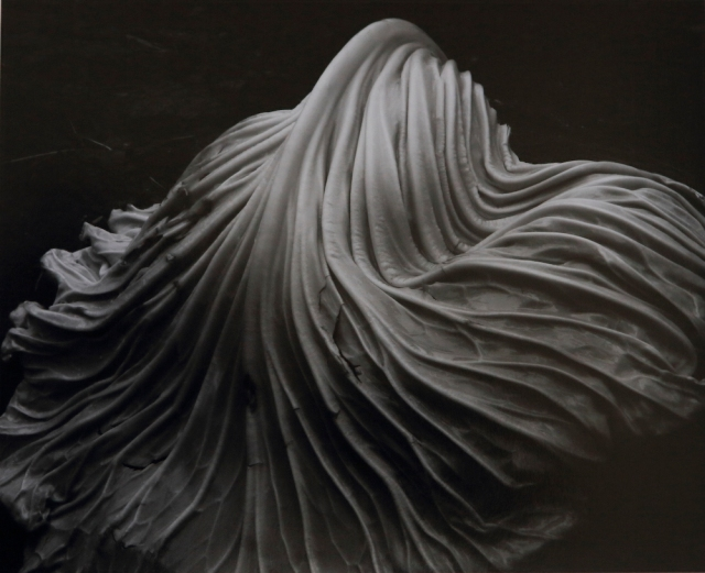 'Cabbage Leaf' ' Edward Weston, 1931.jpg