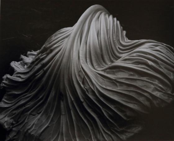 'Cabbage Leaf' ' Edward Weston, 1931.jpg